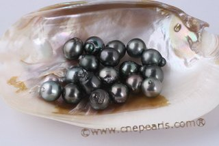 Btahiti1314A Unique 13-14mm Drop Shape Circle Baroque Tahitian loose pearls, A Grade