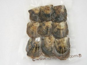 oyster03 279PCS vacuum-packed  pearl oysters with Round pearls in wholesale